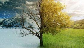 Картинка: Зима, лето, дерево, горы, снег, небо, облака, листья, ветки, трава, поле