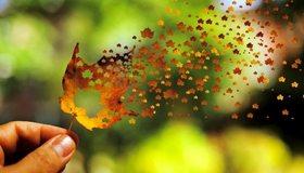 Картинка: Осень, клён, лист, листочки, полёт, ветер