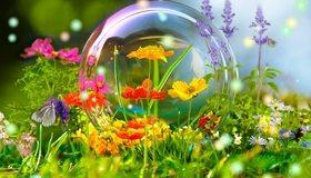 Картинка: Полевые цветы, трава, насекомые, бабочка, шмель, мыльный пузырь