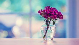 Картинка: Цветы, букет, гвоздика, ветка, ваза, вода