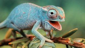 Картинка: Хамелеон, chameleon, ящерица, ветка