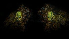 Картинка: Крокодил, аллигатор, глаза, взгляд, макро, свет, ночь, чёрный фон