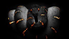 Картинка: Змея, кожа, чешуя, глаза, полосы, опасность, чёрный фон
