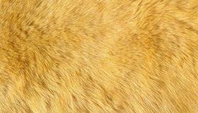Картинка: Шерсть, мех, ворс, жёлтый
