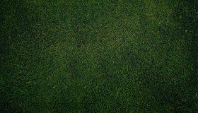 Картинка: Поле, газон, трава, зелёная
