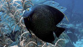 Картинка: Рыбки, глаза, чёрная, вода, водоросли, свет
