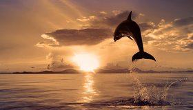 Картинка: Дельфин, прыжок, брызги, капли, вода, океан, солнце, закат, небо, облака