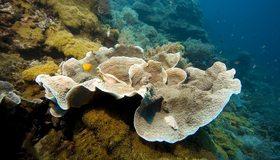 Картинка: Риф, дно, рыбы, камни, кораллы, водоросли