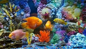 Картинка: Рыбки, морское дно, кораллы, ракушки, камушки, морские звёзды, пузырьки, вода