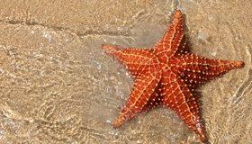 Картинка: Морская звезда, иголки, вода, песок