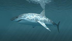 Картинка: Акула, белая, плавник, поверхность, рыба, хищник, блики