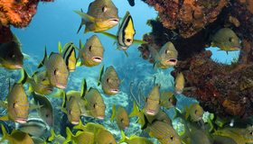Картинка: Рыбки, камни, кораллы, море, вода