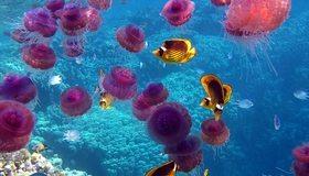 Картинка: Рыбы, медузы, океан, море, кораллы, вода