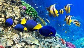 Картинка: Рыбы, океан, вода, риф, кораллы, дно