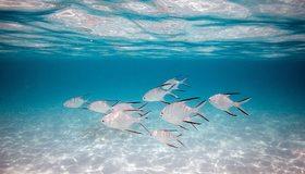 Картинка: Рыбки, стая, вода, свет, волны