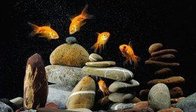 Картинка: Золотая рыбка, камни, галька, пузырьки, плавают, тёмный фон