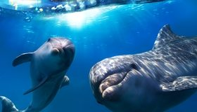 Картинка: Дельфины, плавники, улыбка, глаза, взгляд, вода, свет