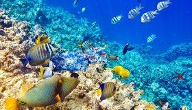 Картинка: Риф, рыбы, кораллы, океан, вода
