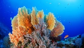 Картинка: Кораллы, рыбки, дно, вода