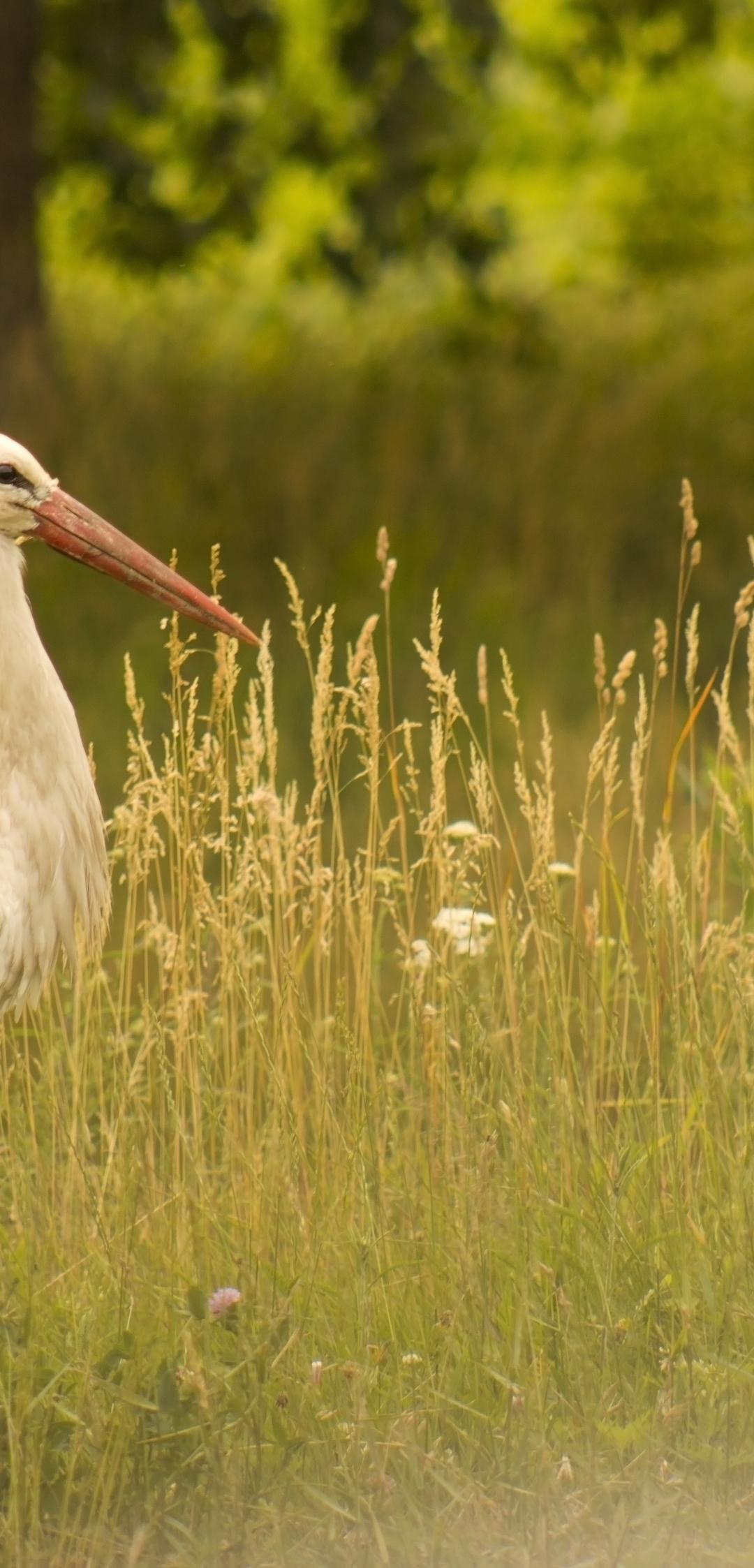 Картинка: Птица, аист, трава, дерево