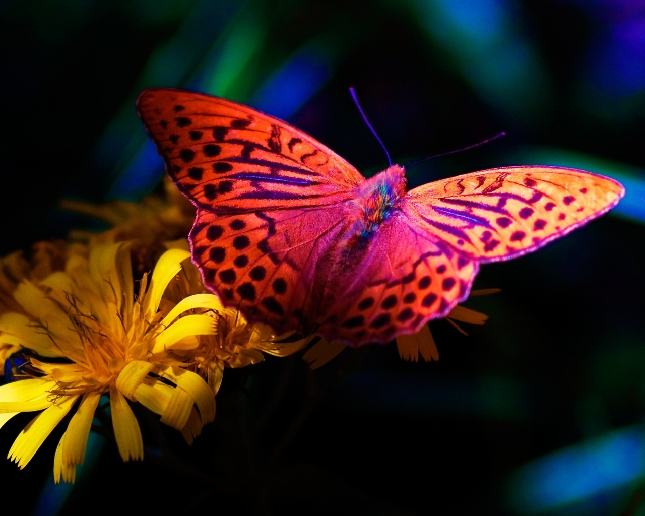 Image: butterfly, yellow flowers, night, nature