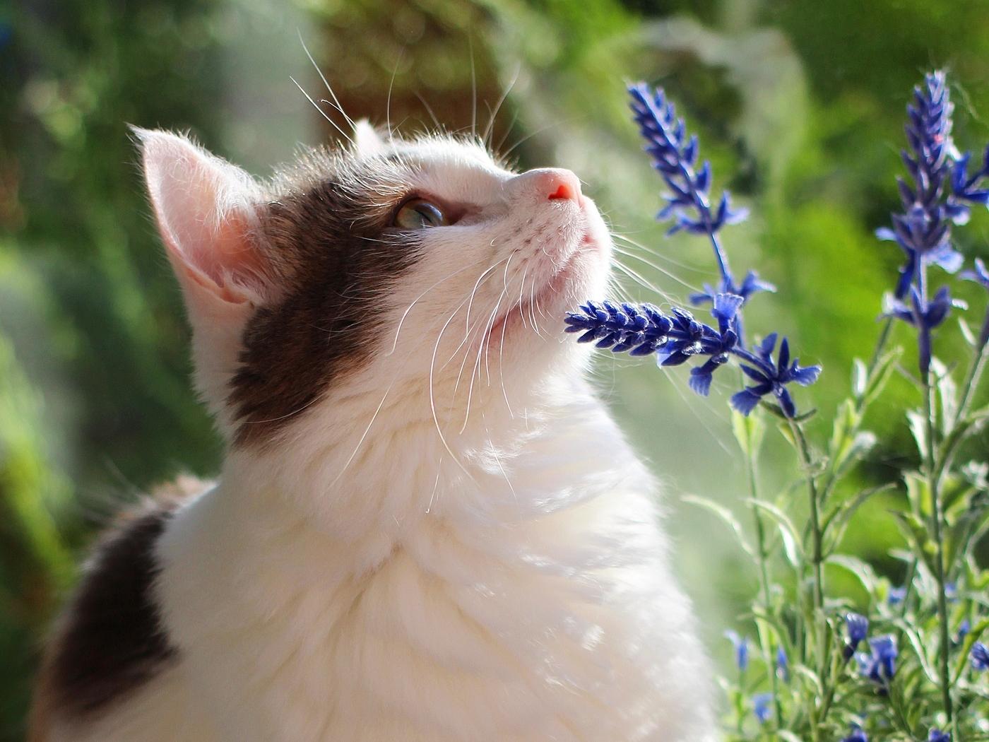 Картинка: Котик, смотрит, цветы, трава