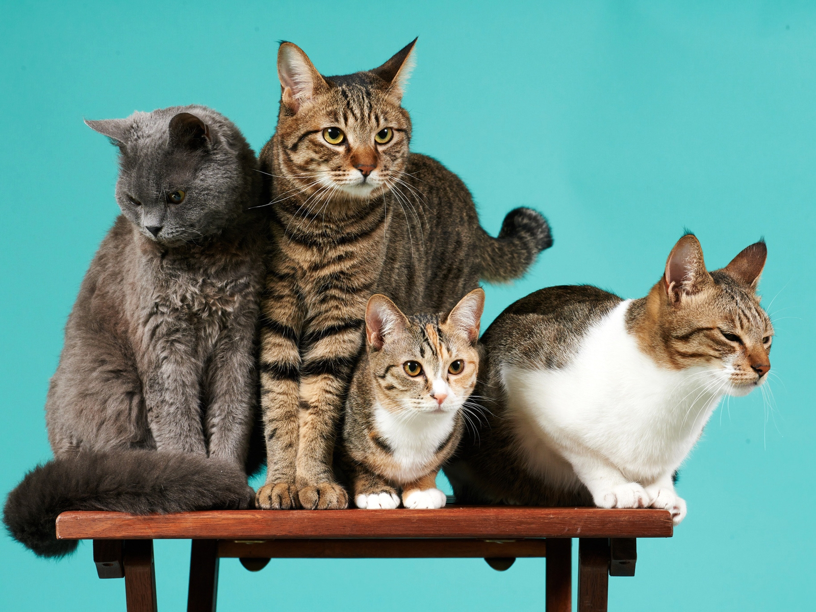 Картинка: Кошки, много, четыре, стол, фон