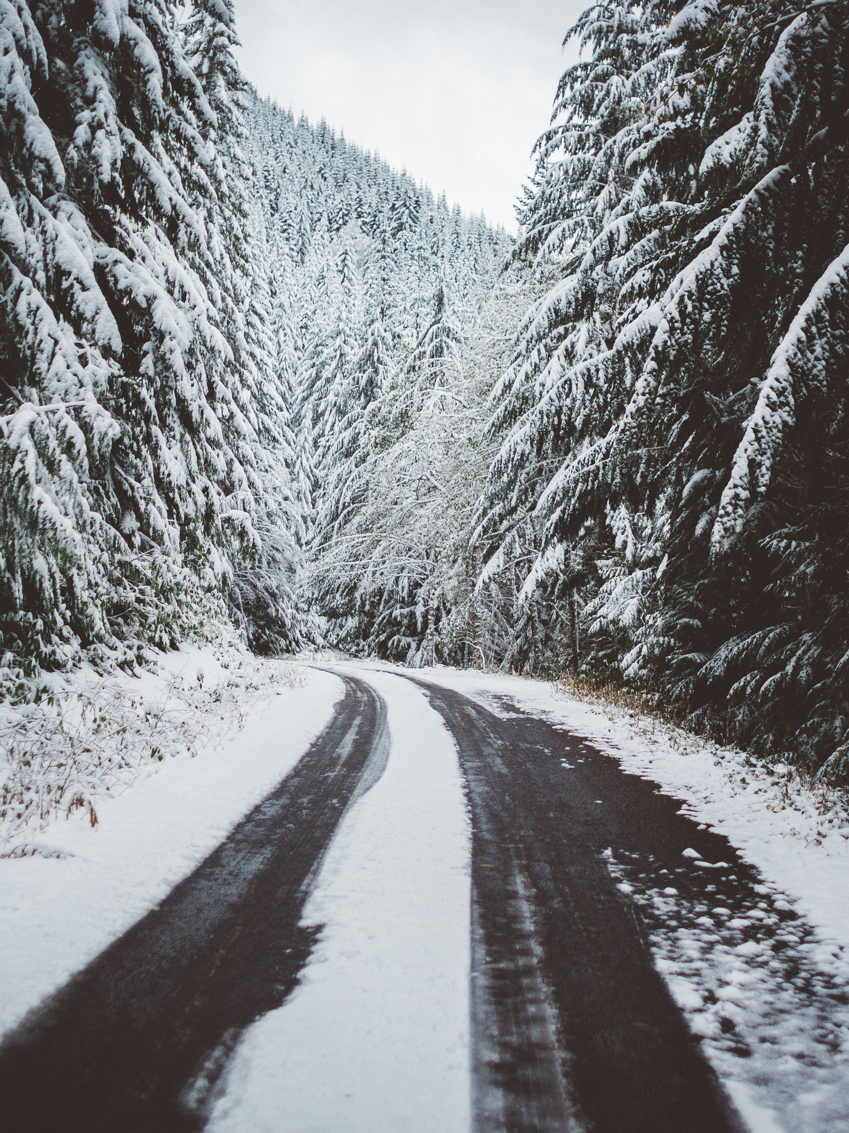 Картинка: Зима, лес, дорога, следы, снег, пейзаж, природа, деревья