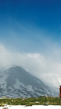 Картинка: Лошадь, поле, трава, снег, небо, гора, облака, туман